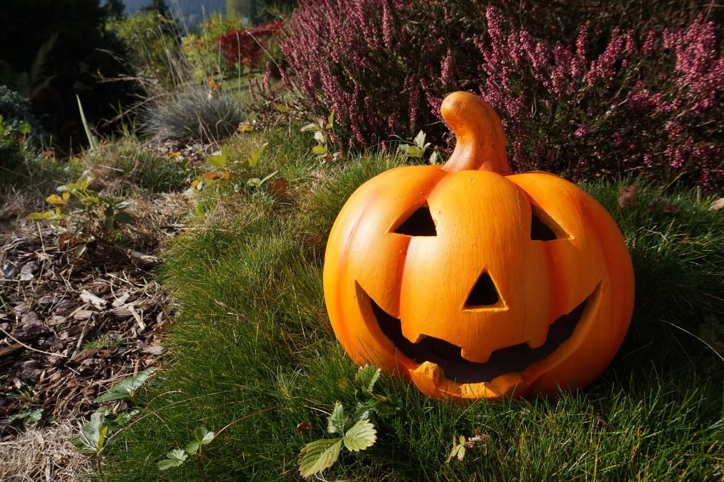 pumpkin-980587_1920
