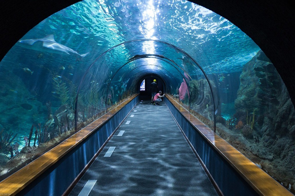 shark-tunnel-aquarium-loropark-05c18d-1024